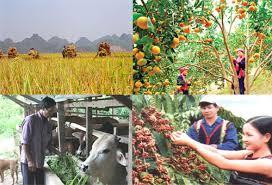 Phát triển kinh tế miền núi bền vững và hiệu quả cần thực hiện đồng bộ nhiều giải pháp